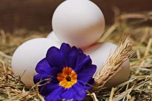 揭秘鸡蛋白过敏的原因鸡蛋白过敏怎么办